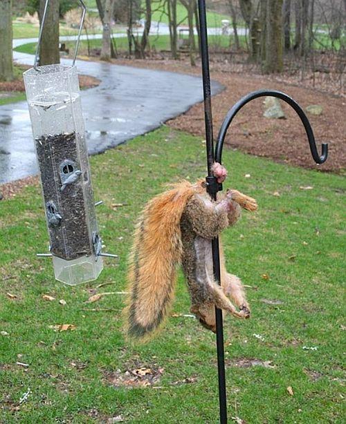 20140507-squirrel.jpg