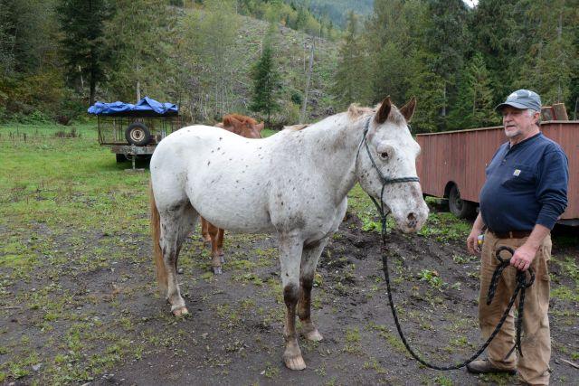 20141012-horse01.jpg
