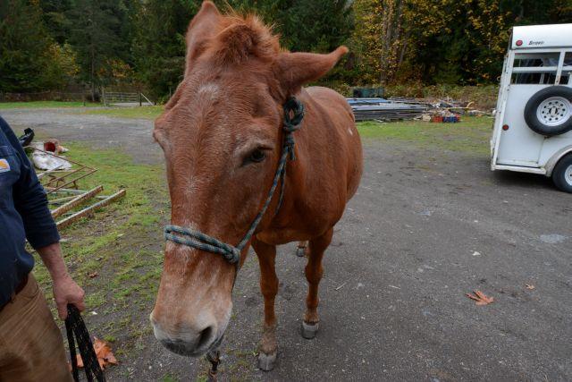 20141012-horse02.jpg
