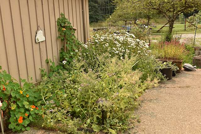 20150822-garden06.jpg
