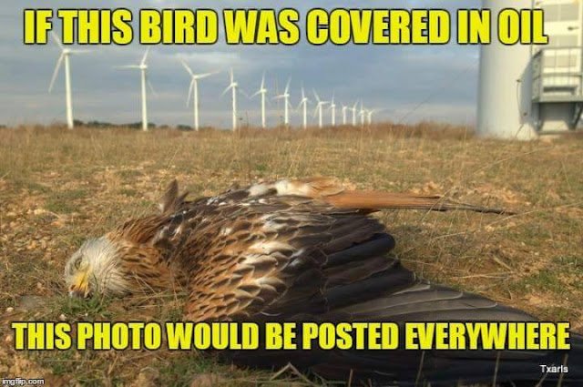 20160510-bird.jpg
