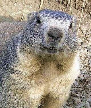 20160510-marmota.jpg
