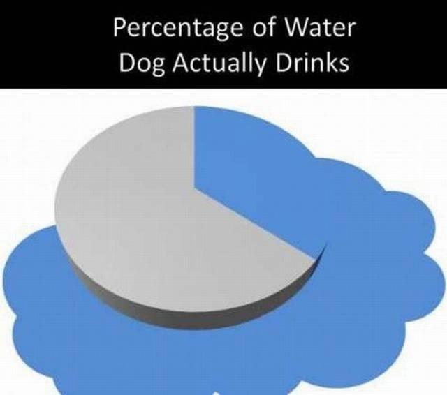 20160620-dogwater.jpg