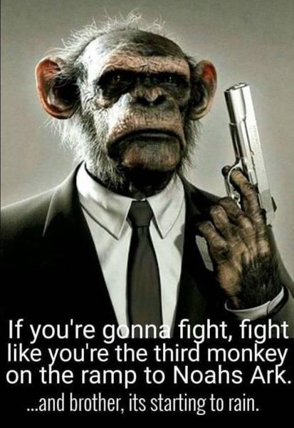 20160819-monkey.jpg