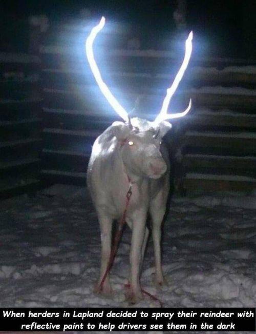 20190404-antlers.jpg