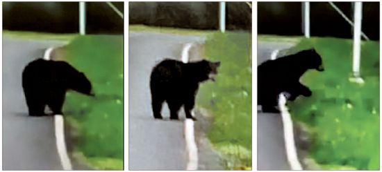 20190501-bear.jpg