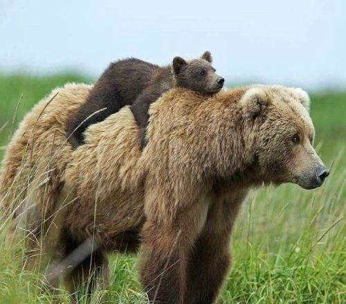 20190718-bear.jpg