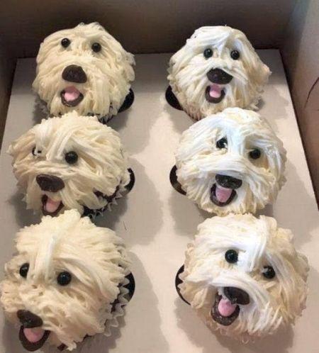 20190818-cupcakes.jpg