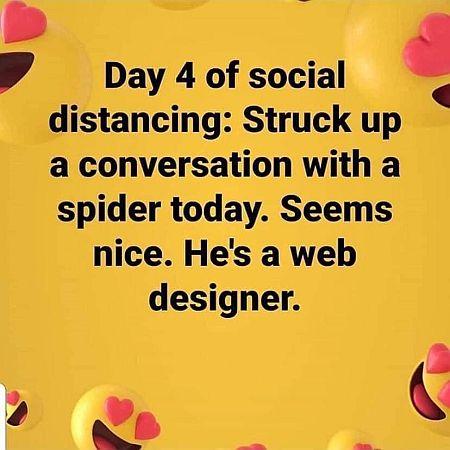 20200330-spider.jpg