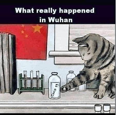 20200513-wuhan-cat.jpg