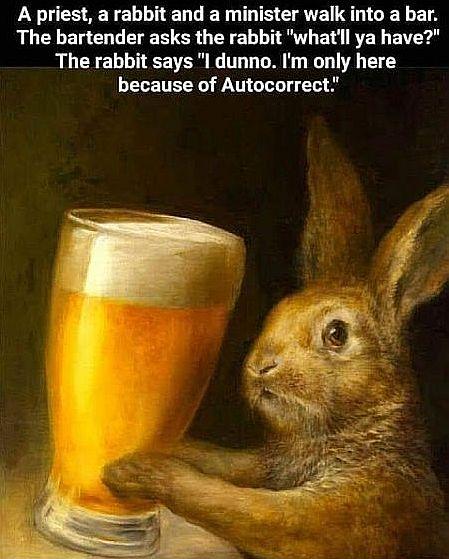 20200531-rabbit.jpg