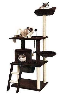 20200630-cat-tree.jpg