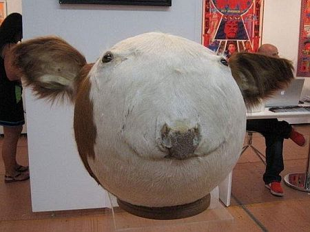 20201104-cow.jpg
