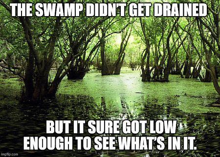 20210222-swamp.jpg